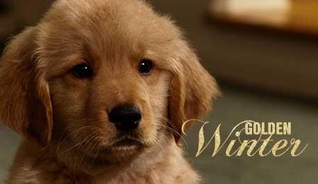 golden-winter\widescreen.jpg